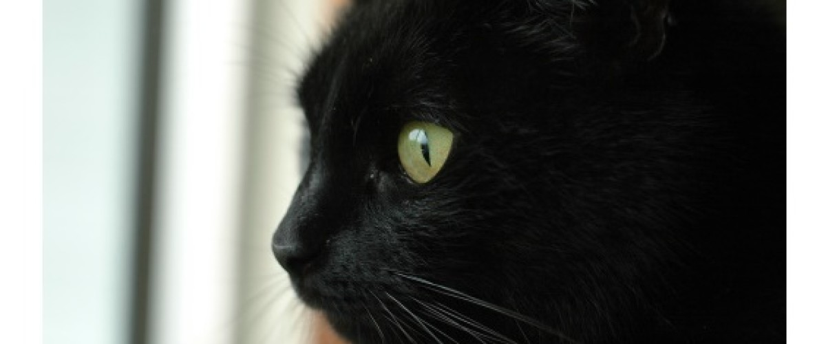 Black Cat Helps Couple Win €2.26m Irish Lotto Prize